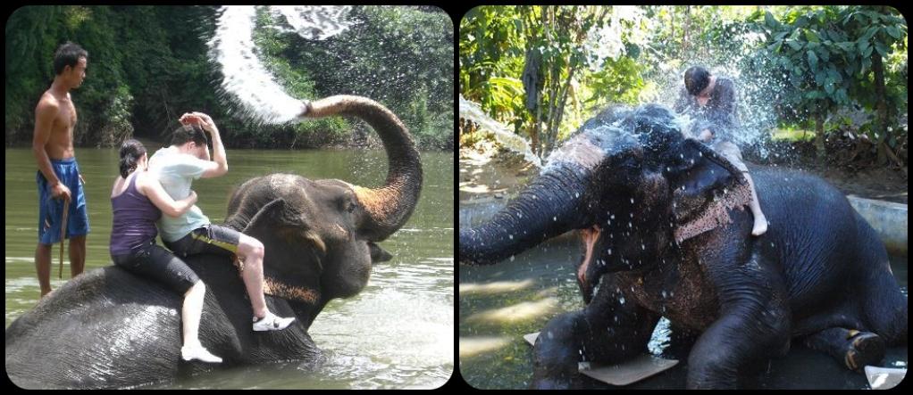 Goa elephant shower