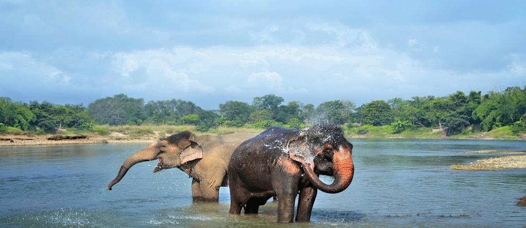 Elephant water shower