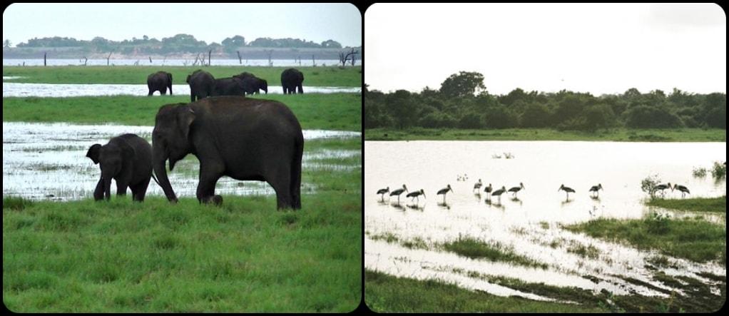 Kaudalla National Park Sri Lanka