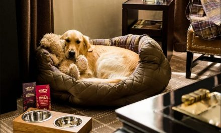 Is Pet-Friendly Places In India The Most Trending Thing Now?