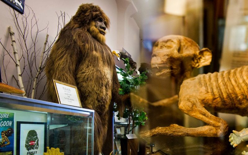 Strange and Crazy Museums across the World That Will Spin Your Head