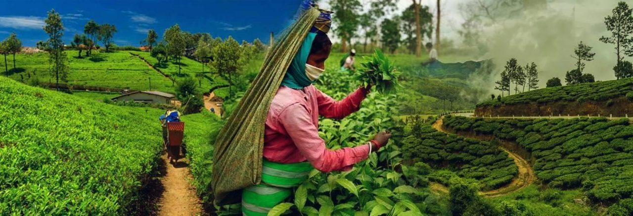 ASSAM – AN UNEXPLORED PARADISE | Best Places to visit in Assam