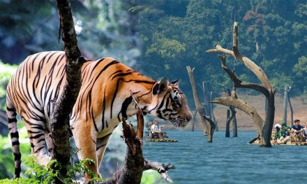 Travel Guide And Places To Visit In Thekkady